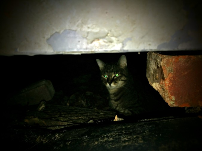 Buster in the crawlspace